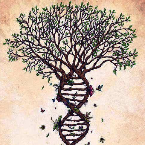 Le social est il réductible au biologique ?